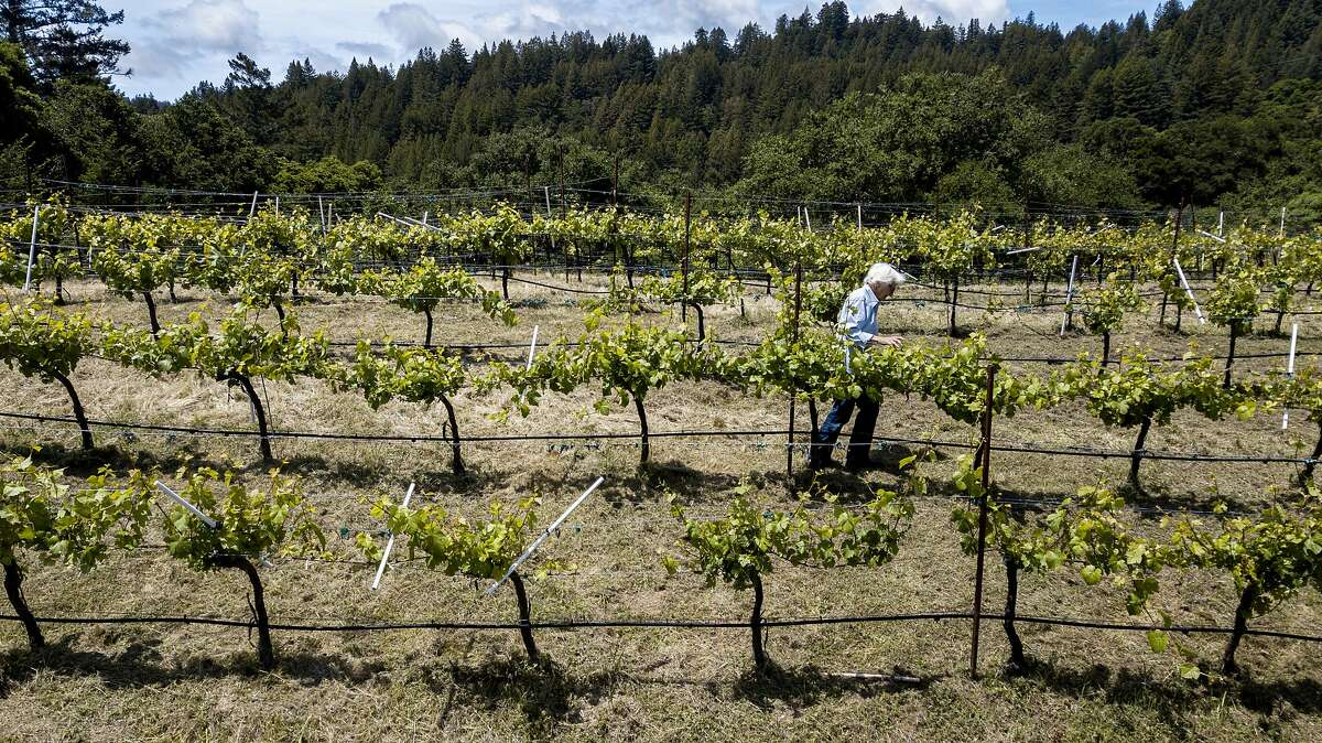 Valerie Ahlgren at the Ahlgren Vineyard on Thursday, May 23, 2019, in Boulder Creek, Calif. The company recently stopped making wines and is preserving the vineyard.
