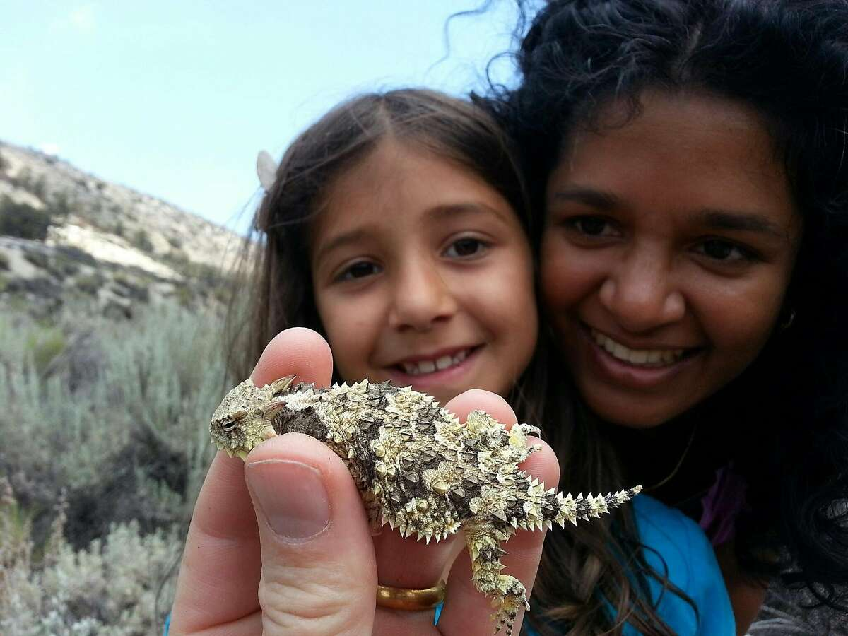 Lalima Gluesenkamp gets to know a�Blainville's horned lizard (Phrynosoma blainvillii) with the guidance of Asha Setty near the Santa Clara River in Kern County, CA.