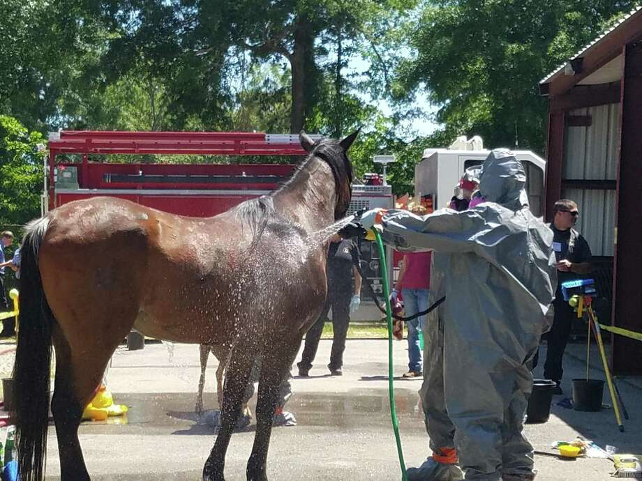 Last year, the Montgomery County Adult Horse Committee sponsored a Large Animal Emergency Rescue Training. The purpose of the event was to train veterinarians, first responders and pet/livestock owners how to act in a situation involving hazardous materials and animals. Photo: Submitted Photo / Submitted Photo