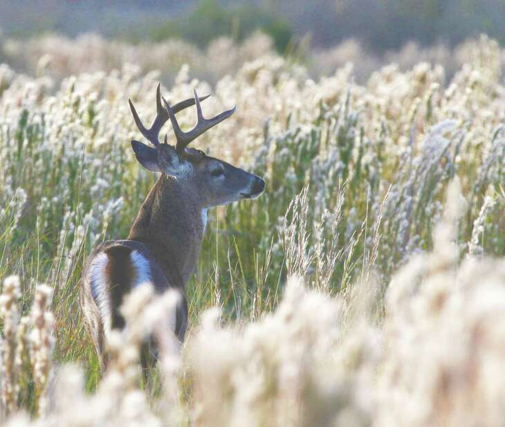 The TPWD's Managed Lands Deer program will start charging a modest annual fee to participating landowners and hunters.