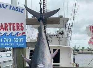 Several rare Bluefin tuna caught in Port Aransas (Photo by Deep Sea Headquarters)