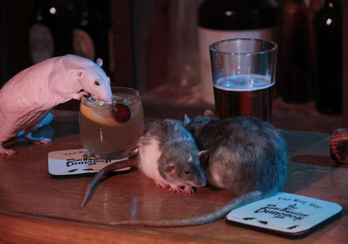 Rat Bar SF
