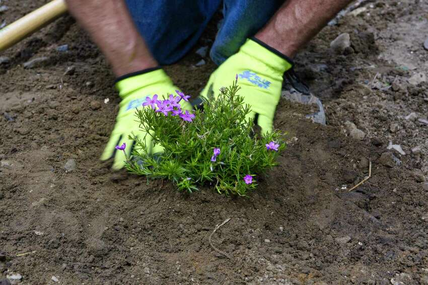 George Brower, construction manager for SEAT plants a creeping phlox as he constructs a rain garden at the Youth Build Affordable Homes project on Tuesday, May 21, 2019, in Schenectady, N.Y. (Paul Buckowski/Times Union)