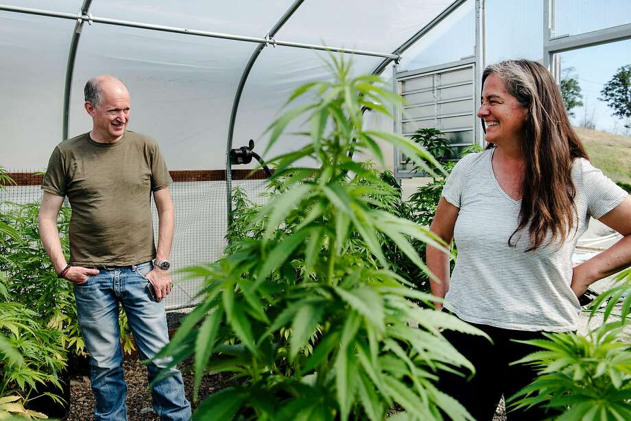 Eric Sklar, a St. Helena resident who is founder of the Napa-based cannabis cultivation and delivery service Fumé, and Elissa Hambrecht, chief operating officer of the company, look over plants at the greenhouse on their farm in Middletown. Photo: Michael Short / Special To The Chronicle