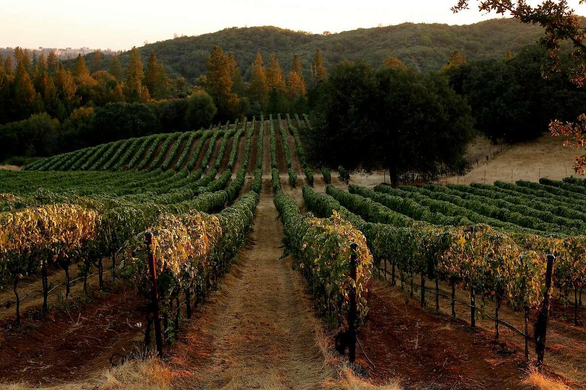 Shake Ridge Vineyards in Sutter Creek, Calif., on Monday, August 18, 2014.