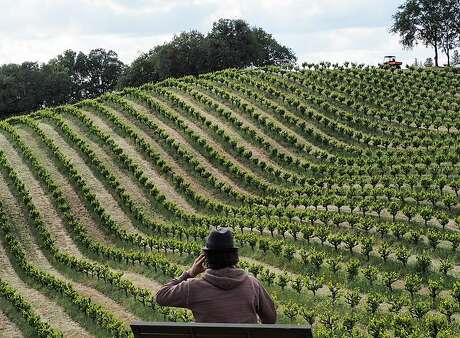 A visitor to Shake Ridge Ranch on a bench overlooking rambling head-trained vines. Photo: Mike Dunne / Special To The Chronicle
