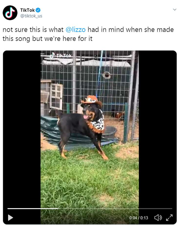 Click through to see some of the best responses to Beaumont Animal Care's video. Photo: Twitter