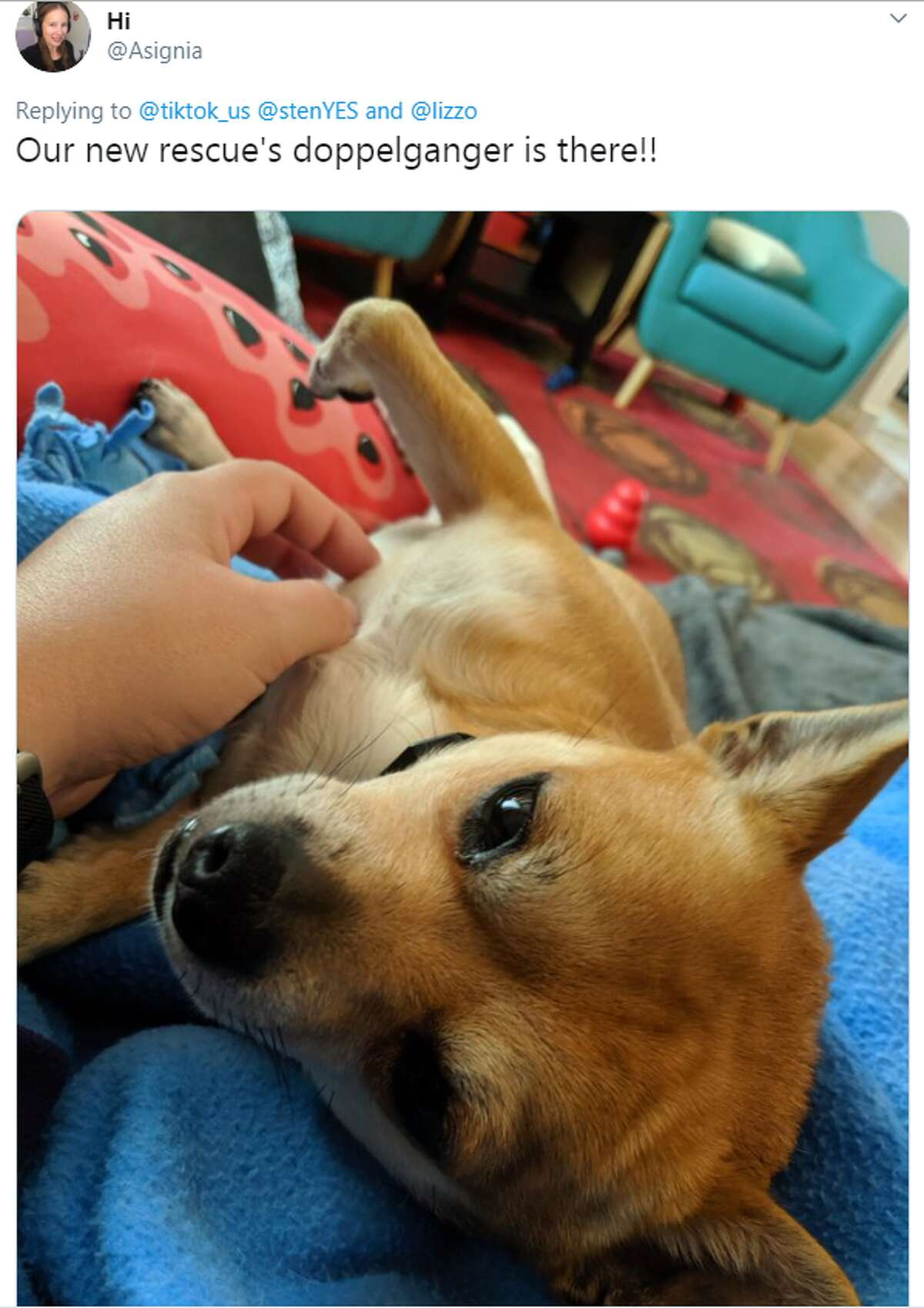 Short video sharing app TikTok shared Beaumont Animal Care's video to advertise a Memorial Day adoption event.