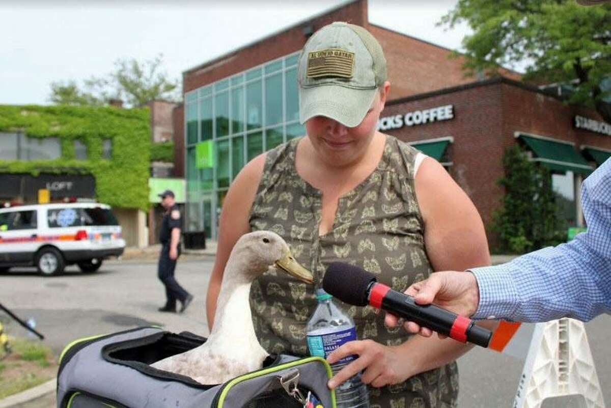 Mochi the duck, accompanied by owner Junie Cassone of Fairfield, quacks into the mic at the Great Duck Race in Westport on June 1, 2019.