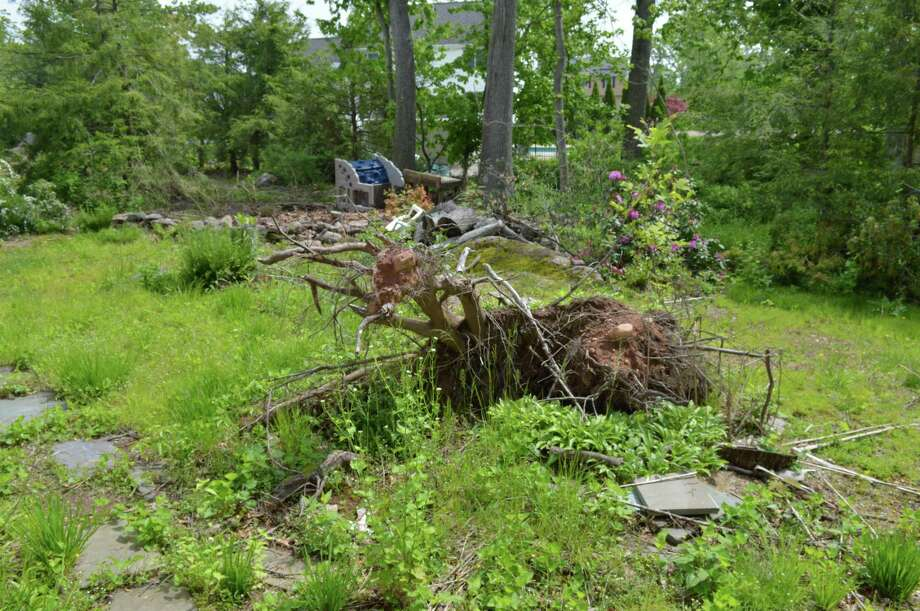 Uprooted trees on Adele Volpe's property in Hamden caused by last year's tornado photographed May 20, 2019. Photo: Clare Dignan / Hearst Connecticut Media
