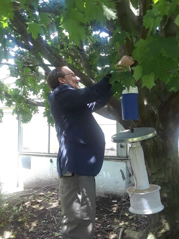Philip Armstrong, research scientist and director of the mosquito surveillance program at the Connecticut Agricultural Experiment Station, demonstrates how to hang a mosquito trap at the station on June 3, 2019. Armstrong said 2019 has been a fairly bad year for the mosquito-borne illness Eastern Equine Encephalitis, but not as bad for another such illness, West Nile Virus. Photo: Amanda Cuda / Hearst Connecticut Media