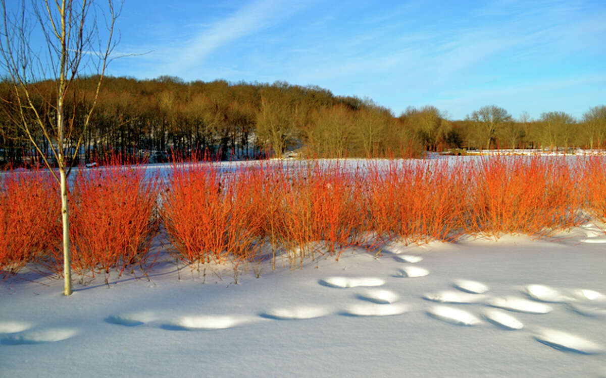 Across Twin Brooks Park by Lisa Romanchick won first prize in the Winter Wonderland category.
