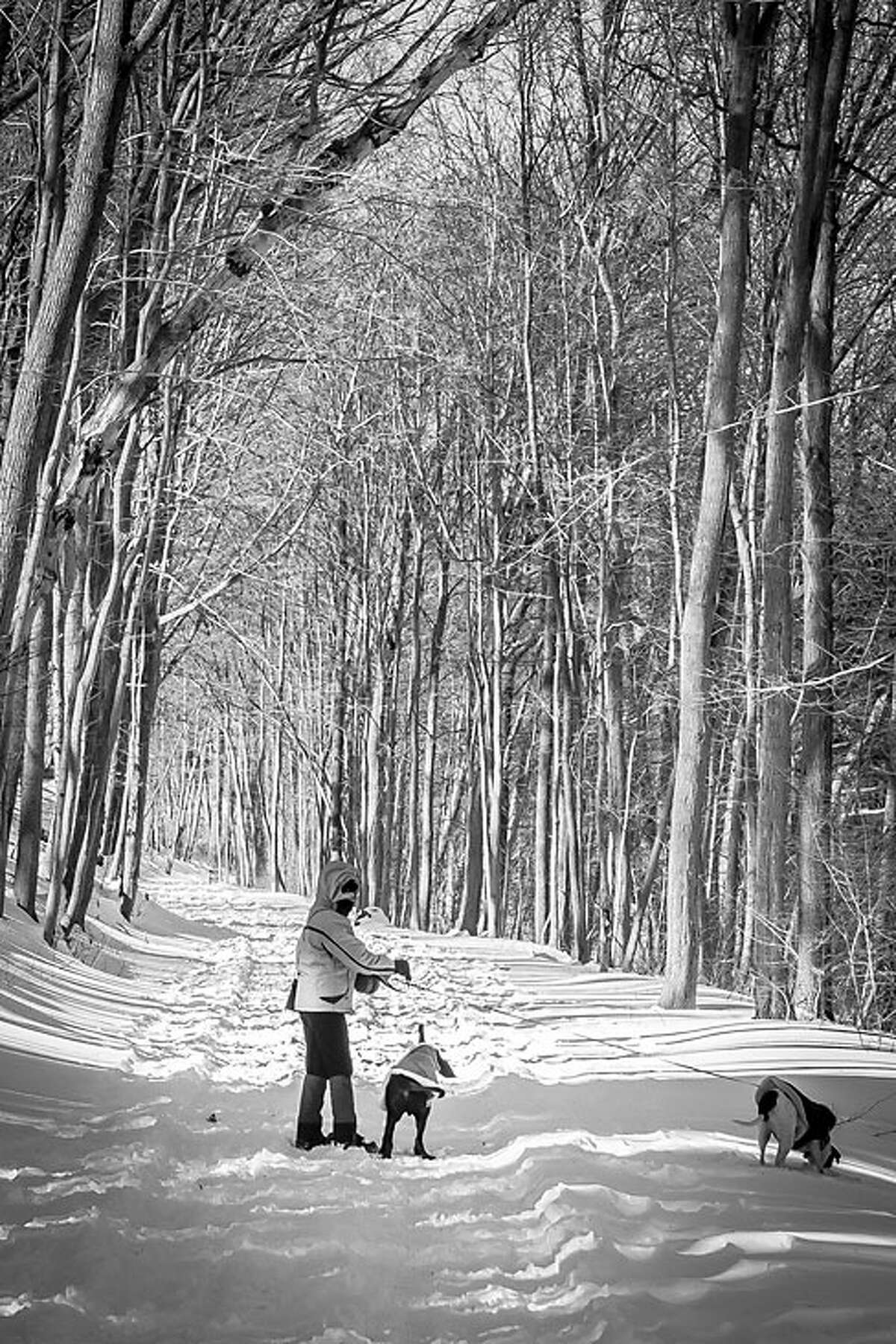 """Pequonnock River Trail Winter Dog Walker by Derek Sterling won first place in the """"Trumbullites in Winter"""" category."""