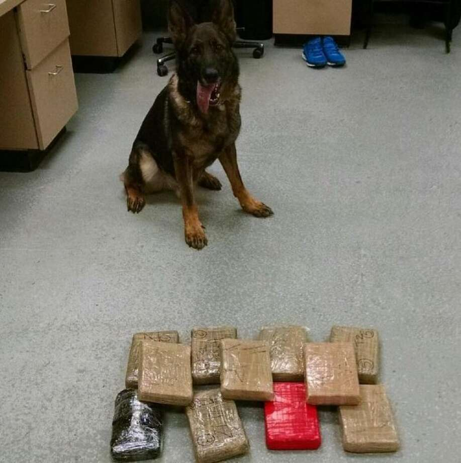 Trumbull Police K9 Cyrus last month after discovering 12 bricks of heroin.
