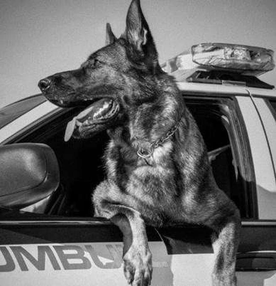 K9 Cyrus hangs off a Trumbull police cruiser.