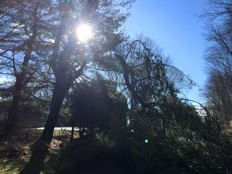 Tree across the line on Driftwod Lane. — Warren Rockmacher photo