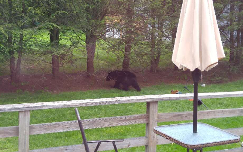 Margaret Distassio recently snapped this photo of a bear in her backyard.