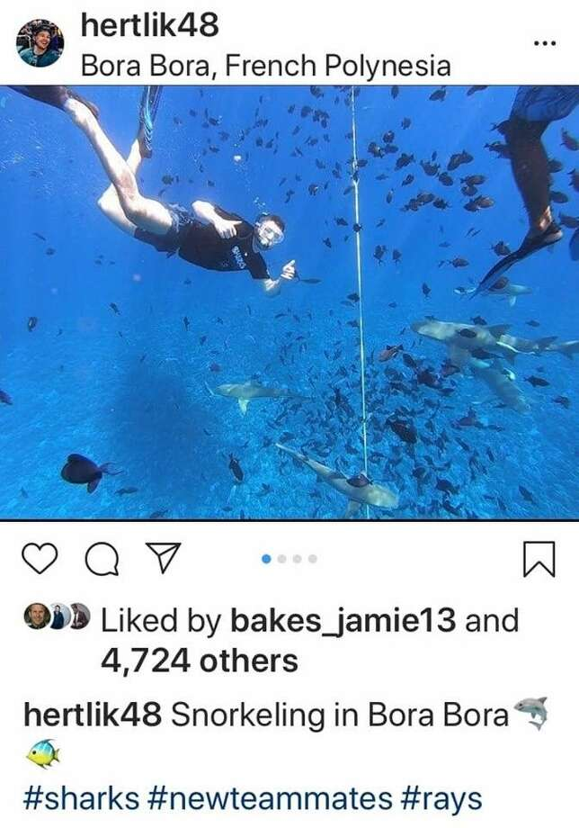 San Jose Sharks star Tomáš Hertl is seen in this photo swimming with sharks, with a San Jose Sharks t-shirt on. Photo: Screenshot Via Instagram