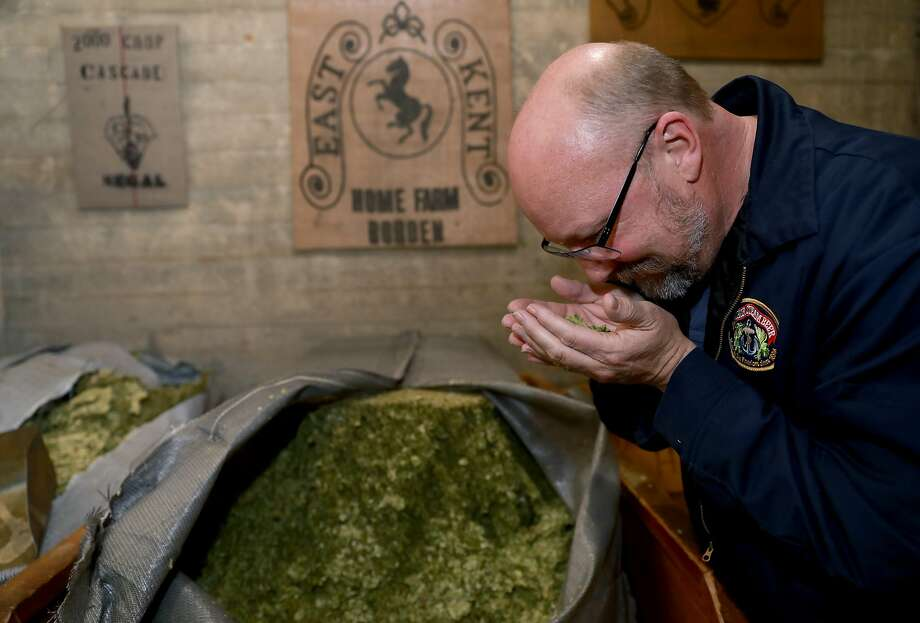Brewmaster Scott Ungermann smells a handful of Cascade hops. Anchor still uses whole-cone hops, instead of the pellets that many breweries use. Photo: Yalonda M. James / The Chronicle