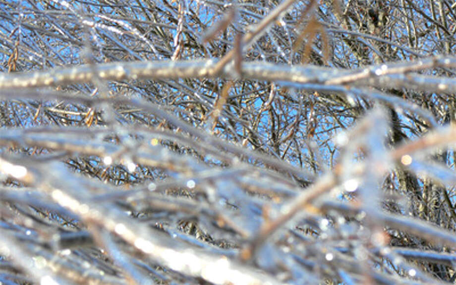 A tree in Shelton is covered with a thin layer of ice from the snowstorm Saturday.