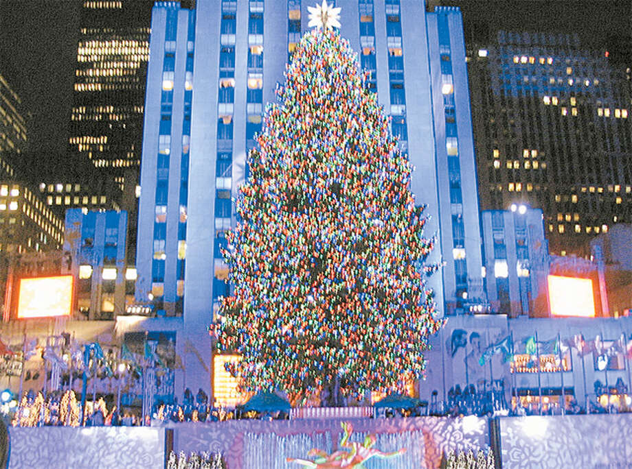In 2007, this Norway spruce from the Rivnyak property in Shelton was the Rockefeller Center Christmas tree.