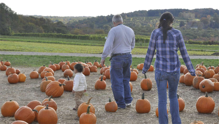 Visitors look for the perfect pumpkin at Jones Family Farms in Shelton. (File photo)