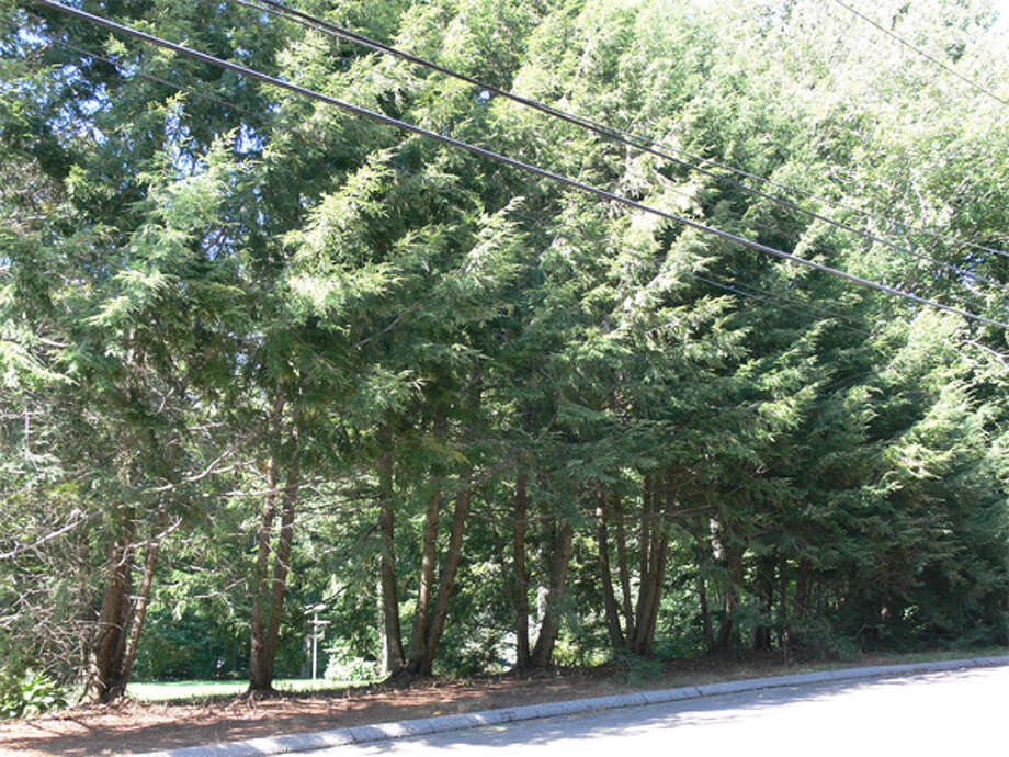 A view of the trimmed hemlock trees on Shelton resident George Bennett's property near the road, taken in September, shows how his back yard now is visible from the street.