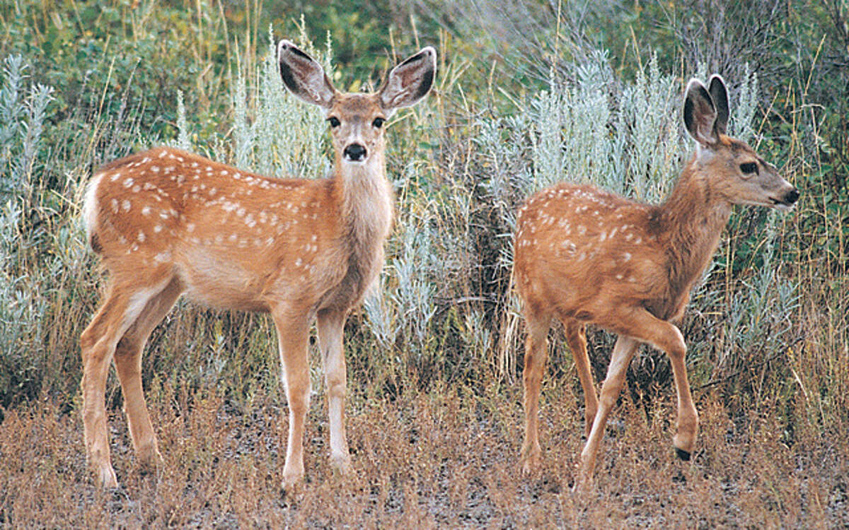 Animals, such as deer, on the roadways cause fatal crashes in Connecticut every year.