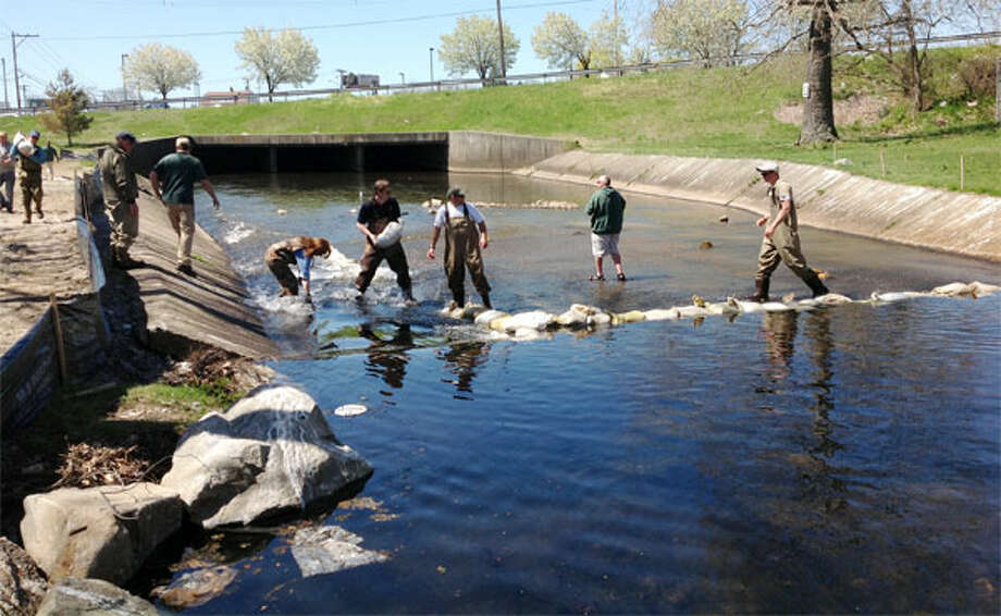 Beardsley Zoo staff and volunteers join state environmental workers in building an impairment to help fish migrate up the Pequonnock River despite the current low water levels.