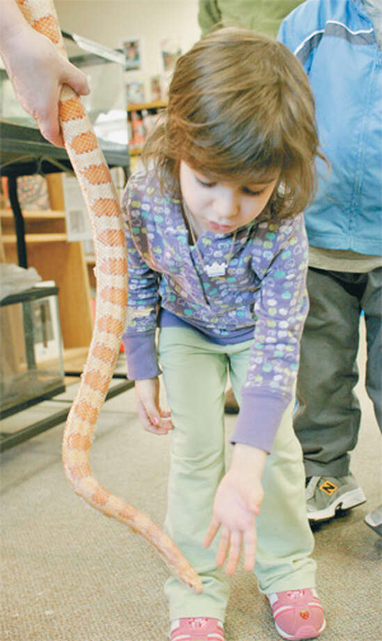 Peaches the pet snake was popular with Huntington Branch Library patrons, especially youngsters. (Shelton Herald 2008 file photo)
