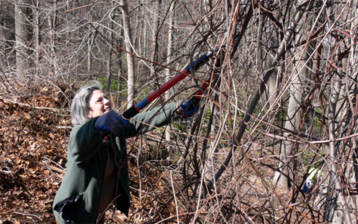 Mary King of Shelton helps remove unwanted, overgrown vines from a tree on the property.