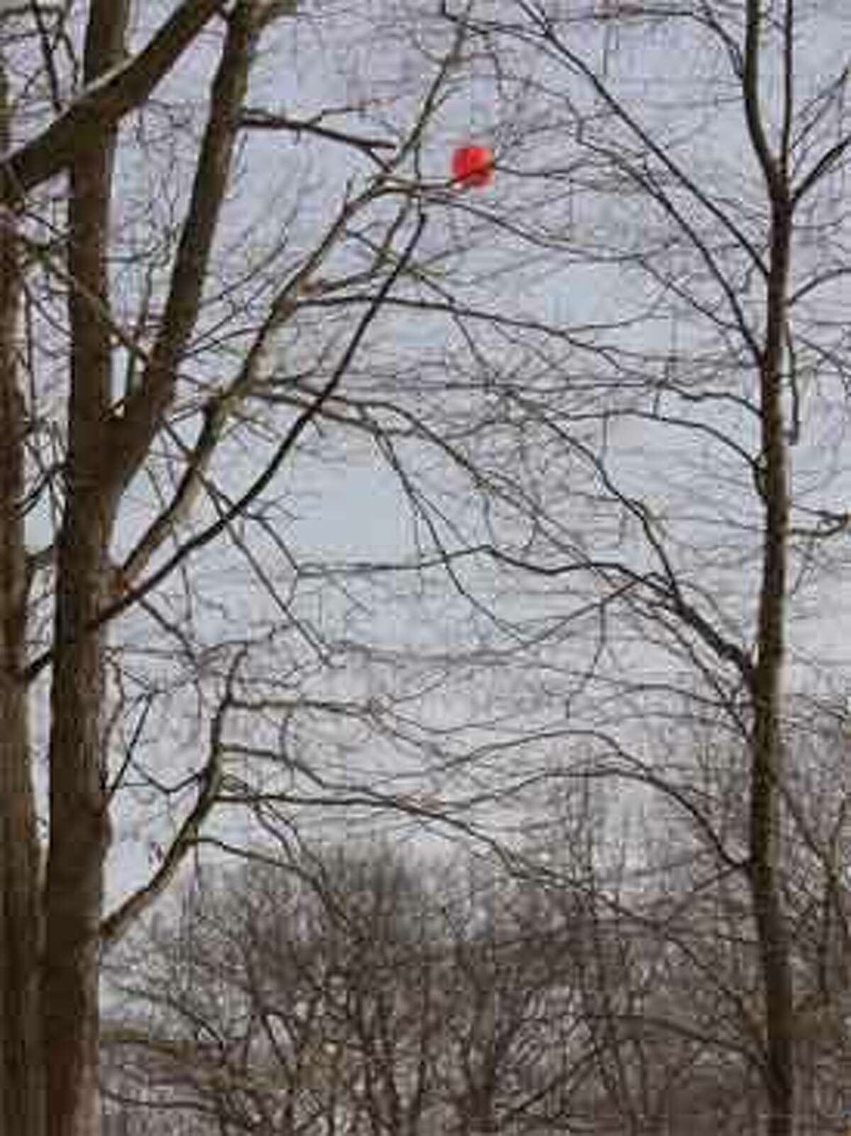 A view of the red balloon, also 120 feet in the air, showing the alternative possible cell phone tower site at the more isolated location, near the southern end of the dead-end Walnut Avenue.