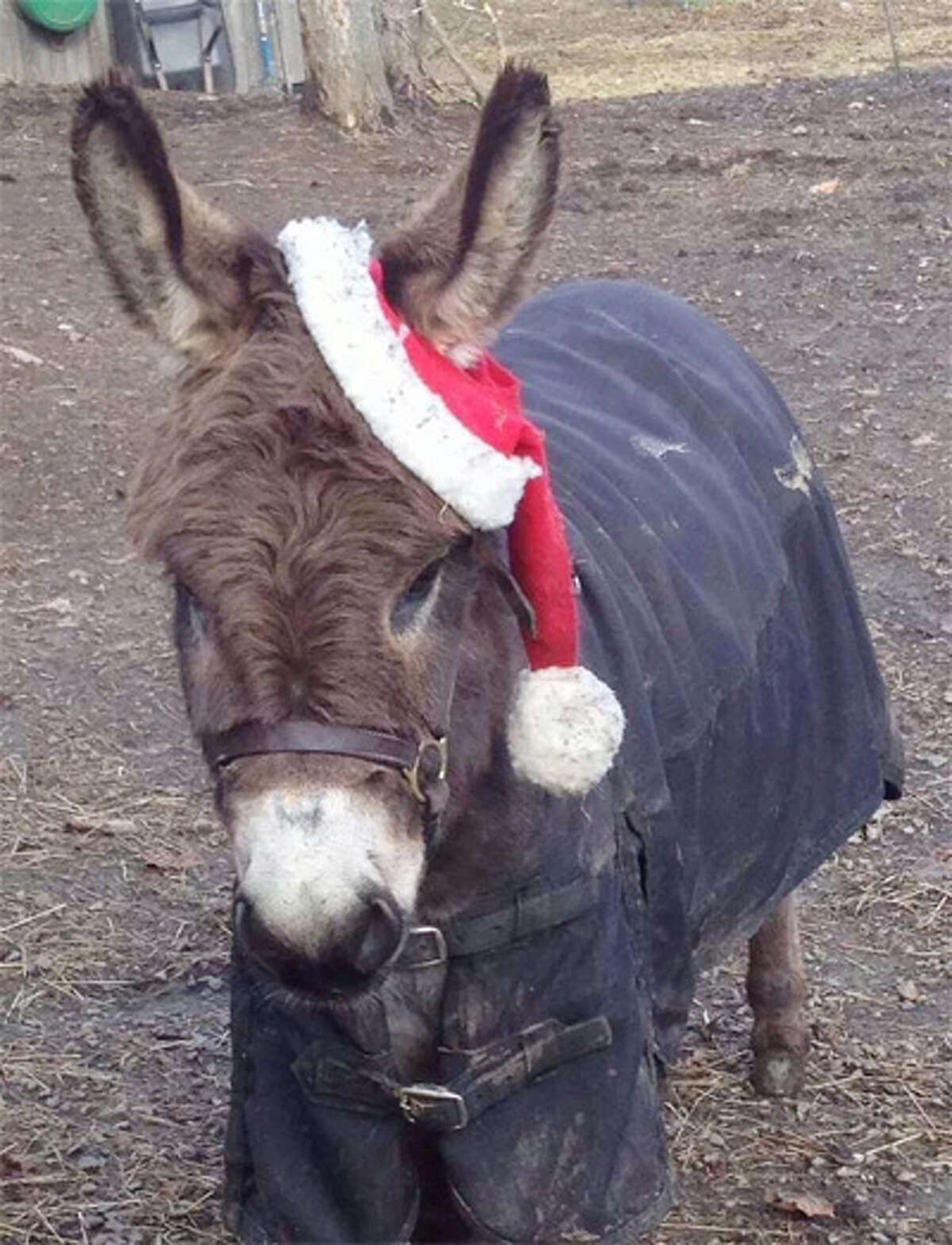 This donkey on Maple Avenue was waiting to say