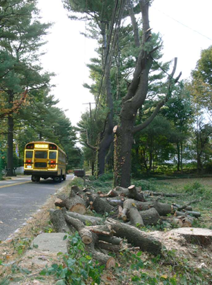 Tree crews hired by UI start the process of taking down a group of older white pine trees considered to be a detriment to the utility lines on Mohegan Road.