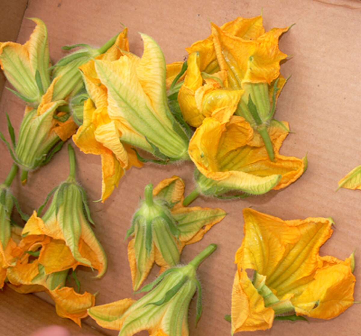 A close-up view of the squash blossoms being sold by Guy's Eco-Garden, run by Guy Beardsley in the city's White Hills section.