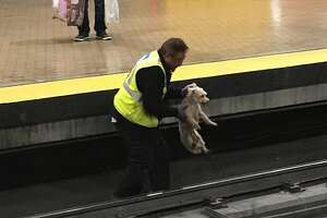 A puppy was rescued from Muni on Thursday morning.