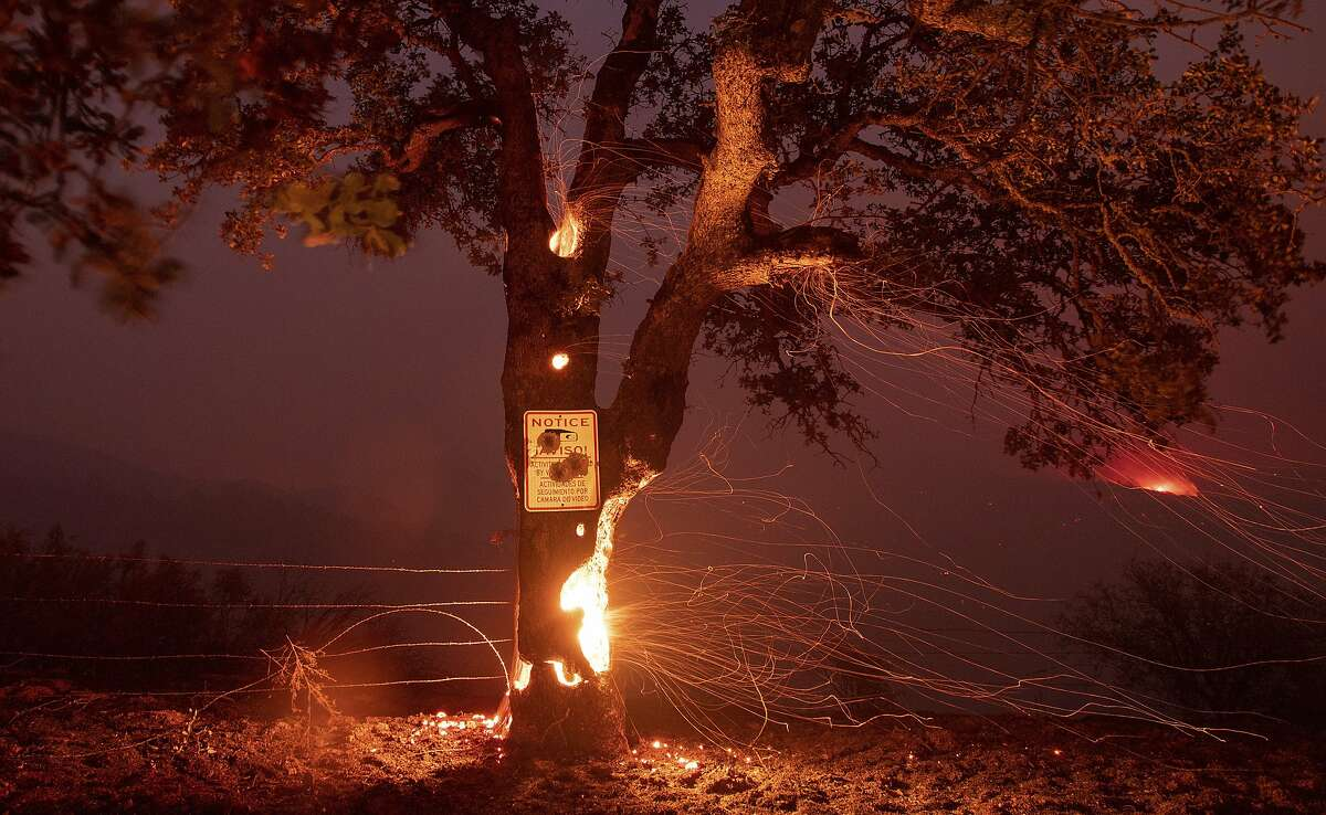 A tree burns from the inside during the Ranch Fire in Clearlake Oaks, Calif., on Sunday, Aug. 5, 2018. (AP Photo/Josh Edelson)