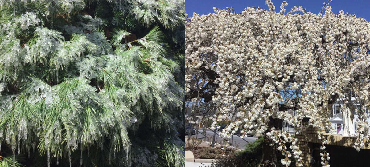 From icicles hanging off of trees a few weeks ago to trees and flowers blooming throughout the city, Spring is finally here. - Renate Sigrist photos