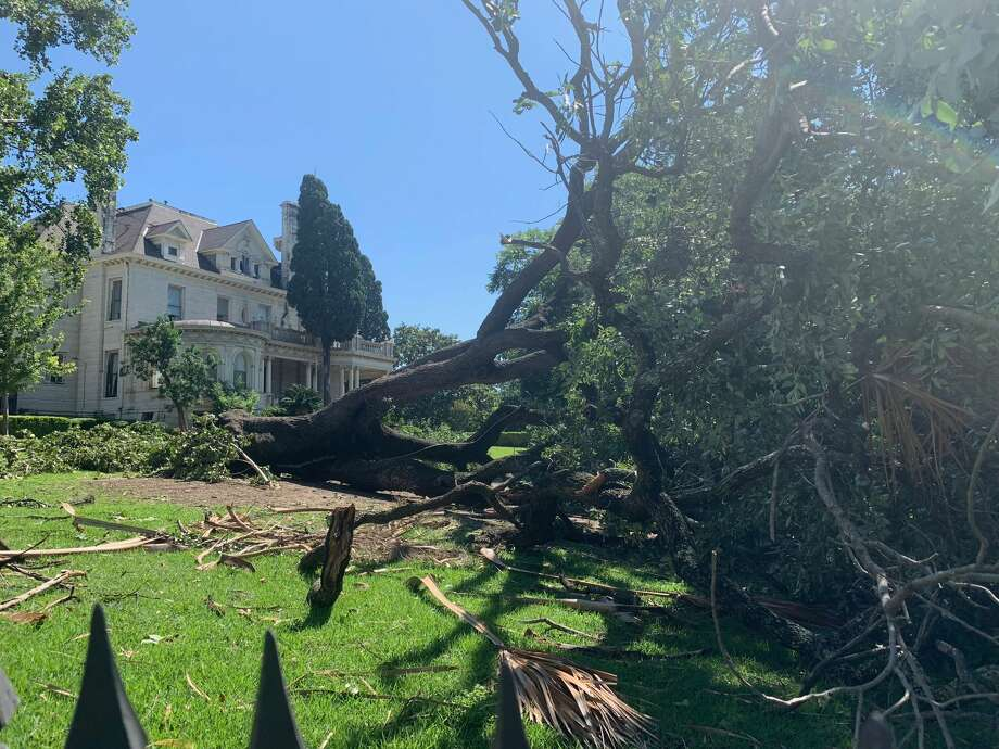 Friday morning, June 7, 2019, a massive tree was still sprawled across the lawn of The Koelher House at 310 W. Ashby Place, which serves as a cultural center for the college. Photo: Madalyn Mendoza
