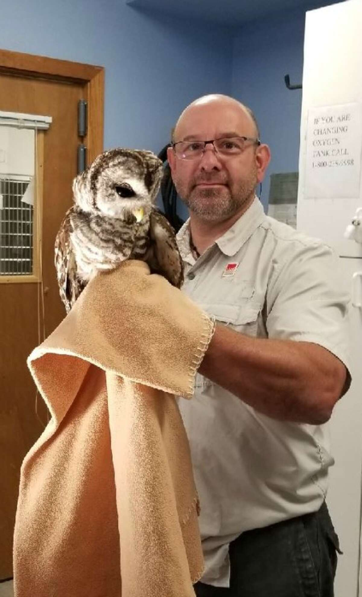 Animal Control took the owl to Countryside Veterinary Hospital, where Dr. Jim Micinilio (pictured) treated and removed the remaining netting.