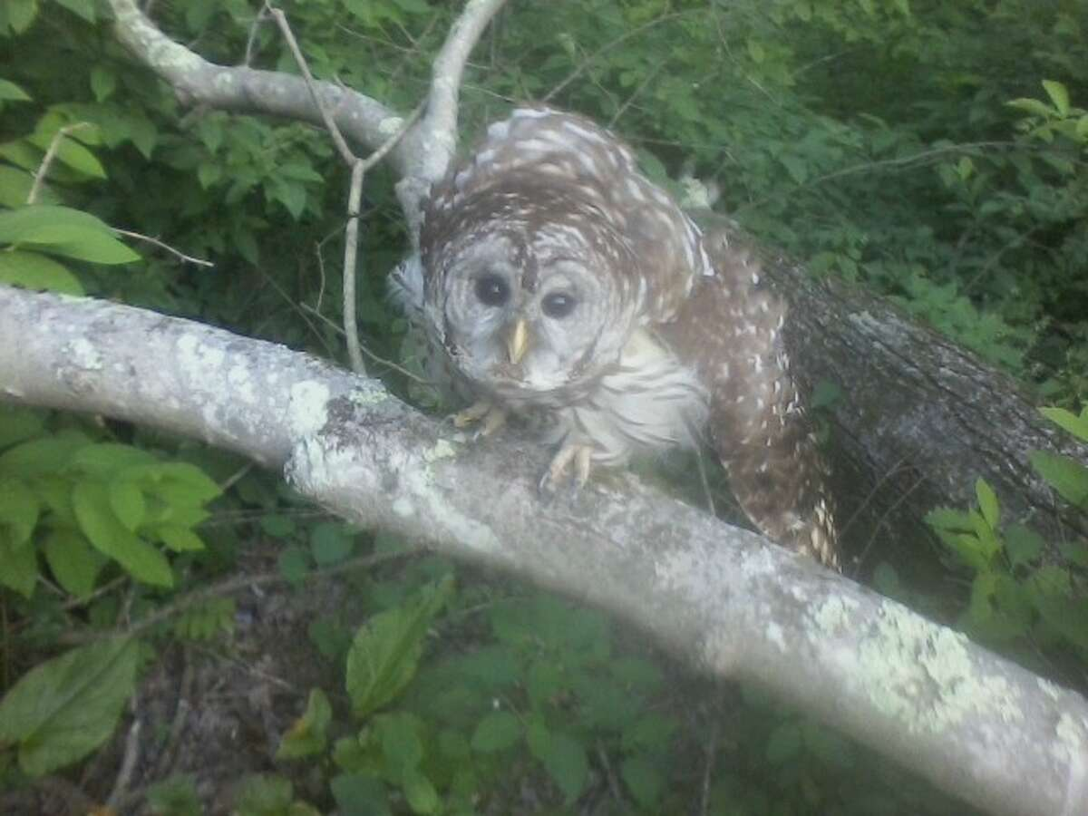 This photo was taken after the owl was set free.