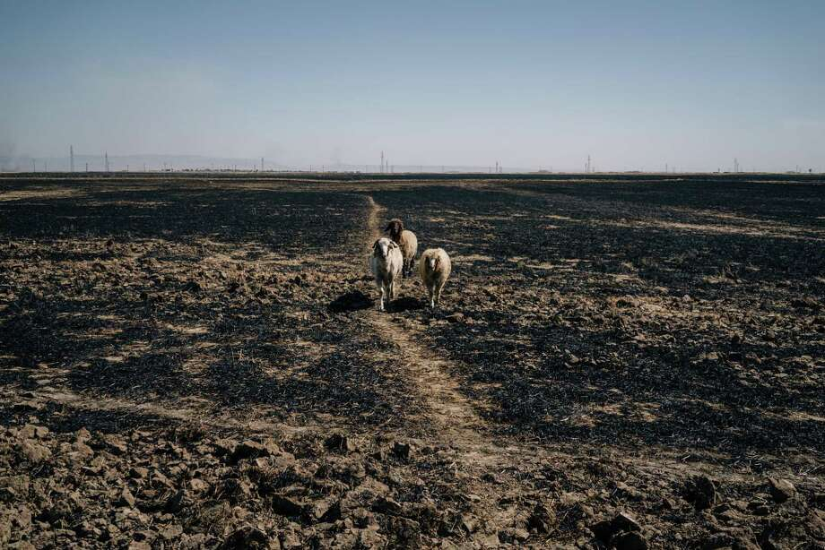 A mysterious wave of fires, blamed on the Islamic State, have been burning large swaths of Syrian and Iraqi cropland, destroying a rare bumper crop and threatening to impoverish the rural populations, such as in Tal Abtakh where an entire family lost 75 acres of crops they had planted. Photo: Photo By Alice Martins For The Washington Post. / For The Washington Post