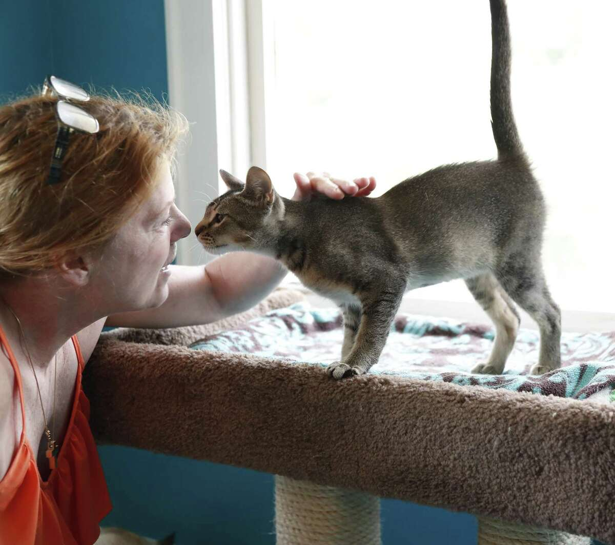 Brenda Fraley, who runs the at Save a Purrfect Cat Rescue, talks to Mason, a little Abyssinian kitten, in River Oaks, May 28, 2019.