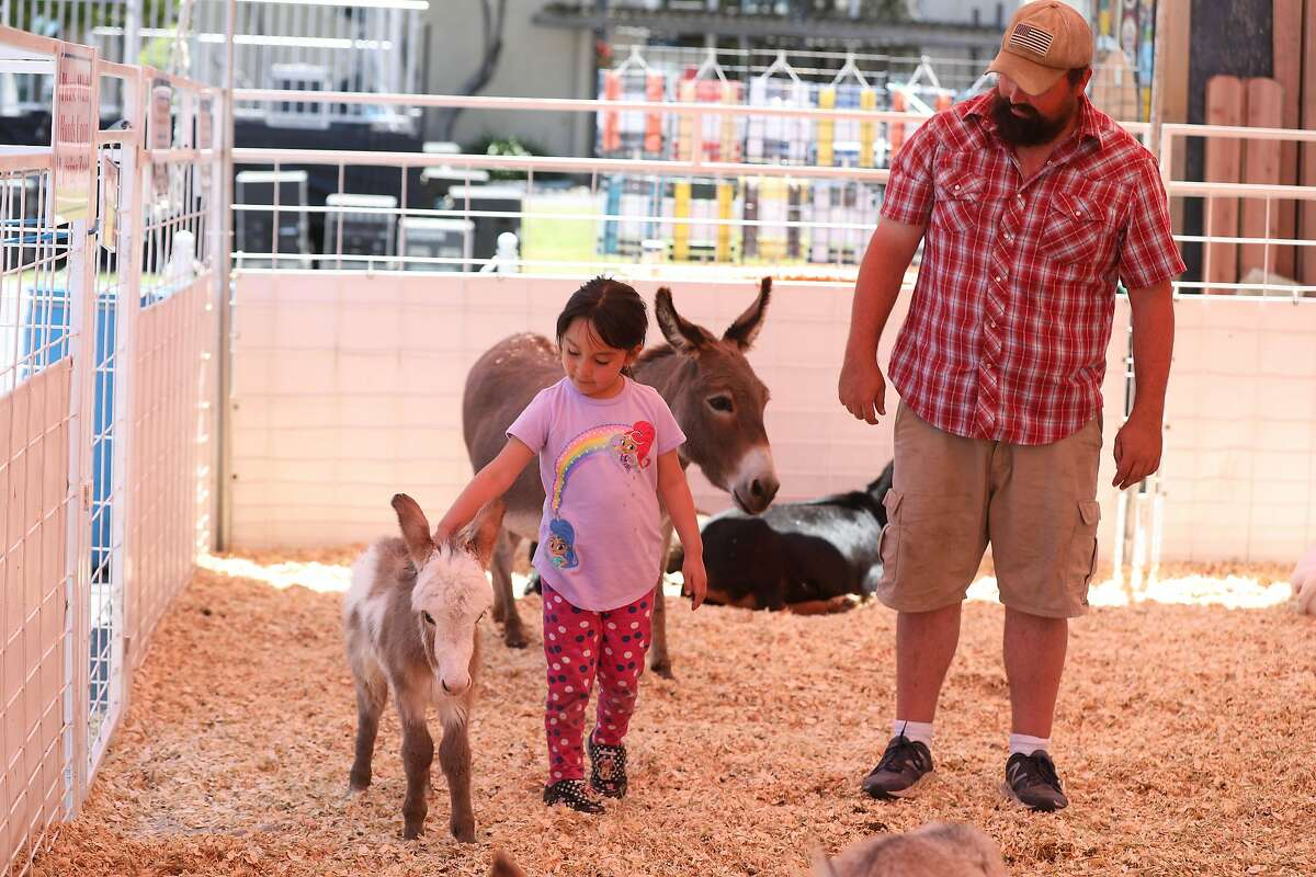 Sofia Munoz (l to r), 5, whose father owns MAM Imported, and Brandon Keiffer, fair trackless train driver, visit with animals at the petting zoo, during a media preview of the San Mateo County Fair at the San Mateo Events Center on Friday, June 7, 2019 in San Mateo, Calif.
