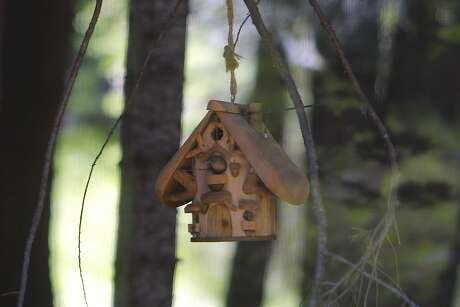 A warbling vireo peeps out of birdhouse, where with a mate, they were building a nest over the weekend