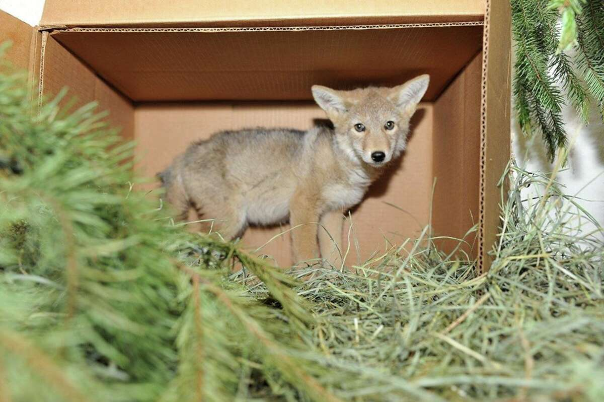 Washington Department of Fish and Wildlife receives hundreds of