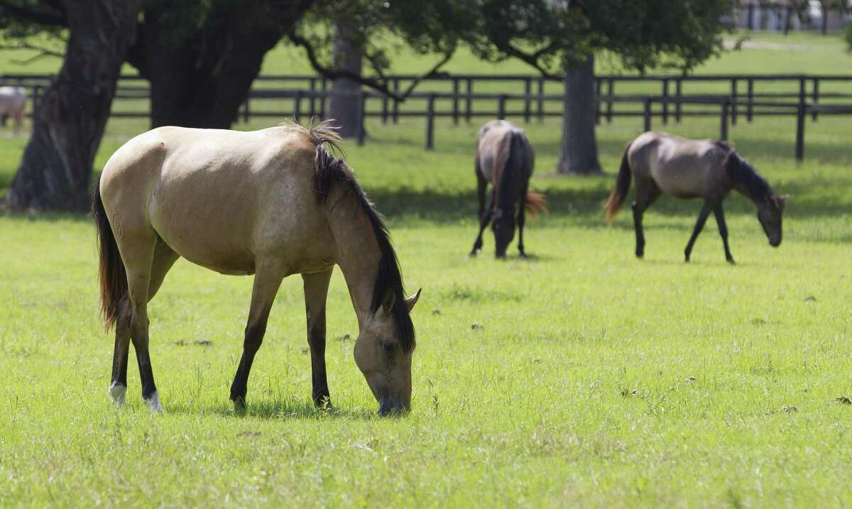 Horses graze on Inspiration Ranch's 40-acre home in 2019 in Magnolia.