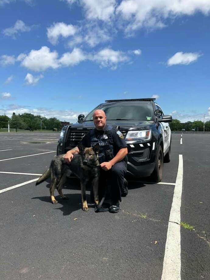 The Schenectady Police Department welcomed Mynderse to its canine program. He is shown with his handler, identified as Officer Smith, on Tuesday, June 11, 2019. Photo: Schenectady Police Department