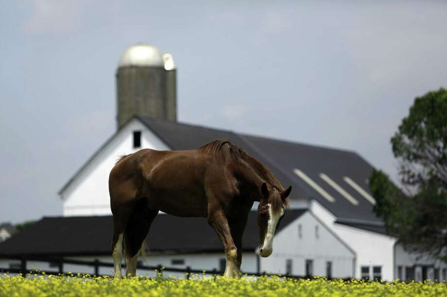 A horse grazes in a fenced field at a farm in Lancaster County. Photo: Jacqueline Larma / Associated Press / Copyright 2018The Associated Press. All rights reserved