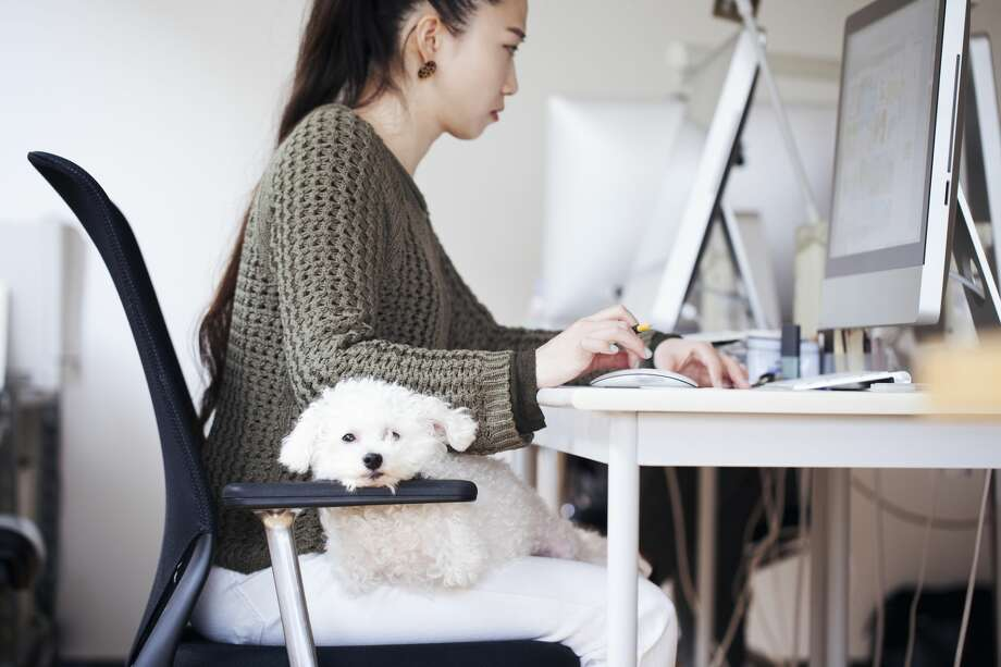 Studies have shown that allowing dogs in the office help reduce stress and boost collaboration between teams. So which companies are the dog-friendliest in the U.S.? Keep clicking to find out.